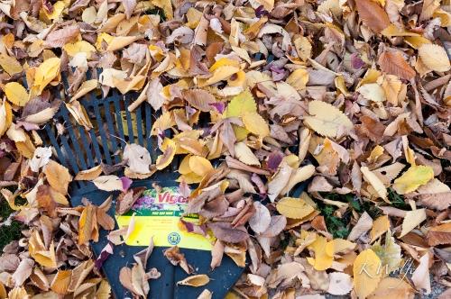 1018-Leaves-064