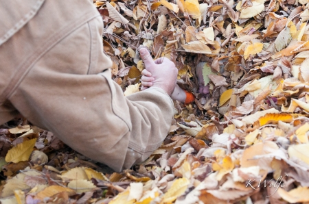 1018-Leaves-172
