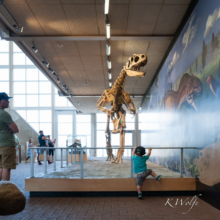 0801-Dinosaurs-14