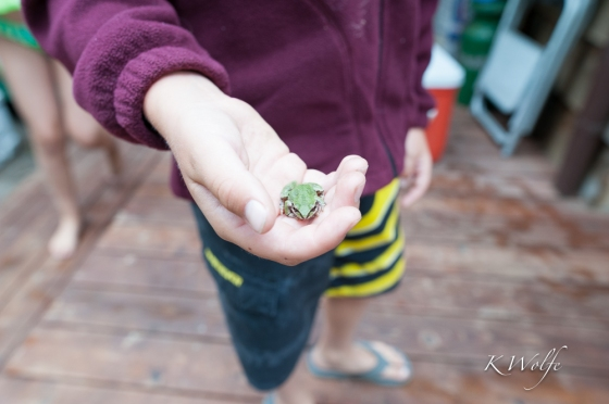0806-Frogs-17
