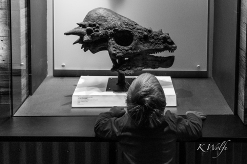 1007-dinosaurs-12